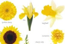 Flora -Yellow