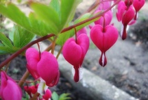 Flora - Pink / Pink Colored Flowers