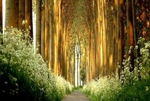 Magical places...real, and imagined