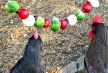 Chicken food / Feed the chickens to keep them healthy and amused. / by Evelyn Saenz