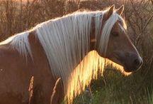 Horses / by Kari G.