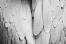 Wings >*<