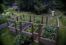 * garden