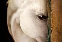 wildlife: horses