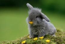 wildlife: rabbit love