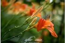 Happy / Inspiration all beautiful Nature Flower Photo
