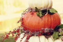 Pumpkin / тыквы тыква pumpkin pumpkins