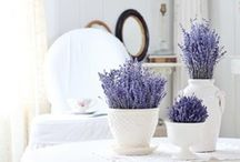 Lavender / lavender love romantic лаванда растения красота романтика красивые картинки