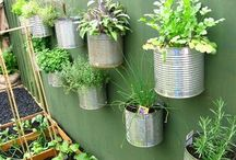 Recycled Tin Cans / by Brianna Piccolella