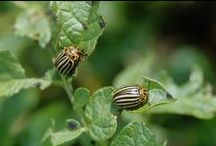 Gardening: How to get rid of pests and deceases