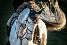 Horses <3 / by Sarah Strobel