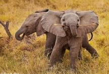 Elephants / by lisa kastello