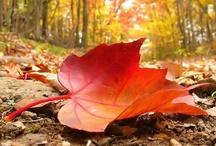 Autumn / by lisa kastello