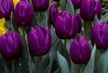 Pasión por el violeta / Todo en color violeta