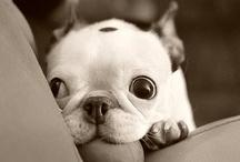 Cute-Cute-Cute / by Darragh Handshoe