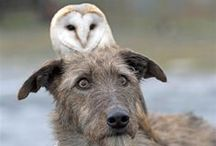 owl love / by Case Of Base