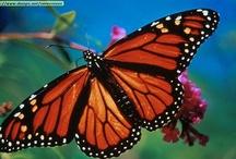Butterflies, Dragonflies and bugs!