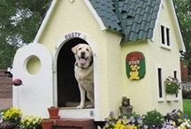 Pets are Family / Design space for your pets into your family home