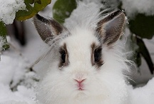 Winter III / Snowflakes are the fairy dust of winter.  ~Albert Einstein / by Beth Mills Foster