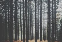 Autumn/Otoño