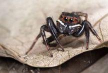creepy crawlers / by Nicole Klein