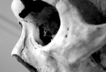 the bone room / by Nicole Klein