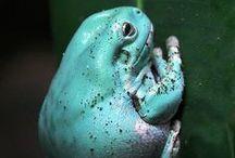 Amphibians II / by Beth Mills Foster