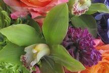 blooms up close at