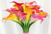 flowers / by colette
