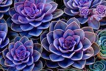 purple / by Amber Neid