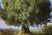 Olivella's Blog / by Olivella® Virgin Olive Oil Skin Care