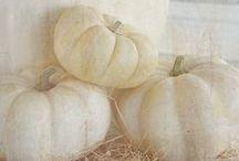 white / by Amber Neid