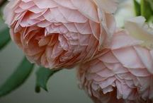 pink / by Amber Neid
