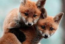Animals  / #animals #nature