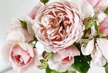 Flowers & Herbs / #flowers #herbs #floral