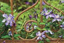 - Secret Garden - / by Sari | Muistojen polulla |