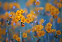 Flowers / by Beatrice Winter