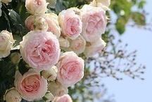 Pretty Flowers / by Angela Krohn