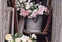 - Flower Shop - / by Sari | Muistojen polulla |