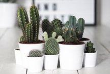 O u c h  C a c t u s /  All about Cactus