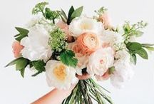 Amy + Brad / COLOR + STYLE:  Blush, beige, ivory, green; romantic and whimsical.