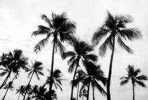BEACH CHIC / by Merissa Revestir