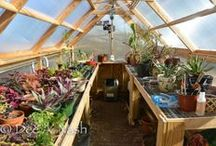 GARDEN: GLASS HOUSES AND GREENHOUSES / Don't throw rocks at glass houses, because one may be your own.