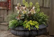 GARDEN: CONTAINERS / How to garden with containers. Growing vegetables and other beautiful plants in pots.  / by Dee Nash