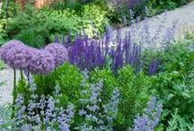 GARDEN: BLUE / My favorite color by far. / by Dee Nash