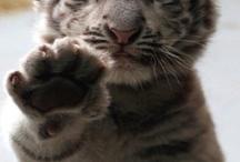 Animal Cuties / by Ann Boyer