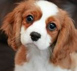 DOGS / An adorable collection of everything to do with cute puppies and dogs.
