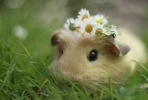 Cutie Patooties! / by Jenna Rose