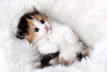 Cute as a button! / The cutest fur balls :)