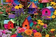 colors / by Rosslynn Burt